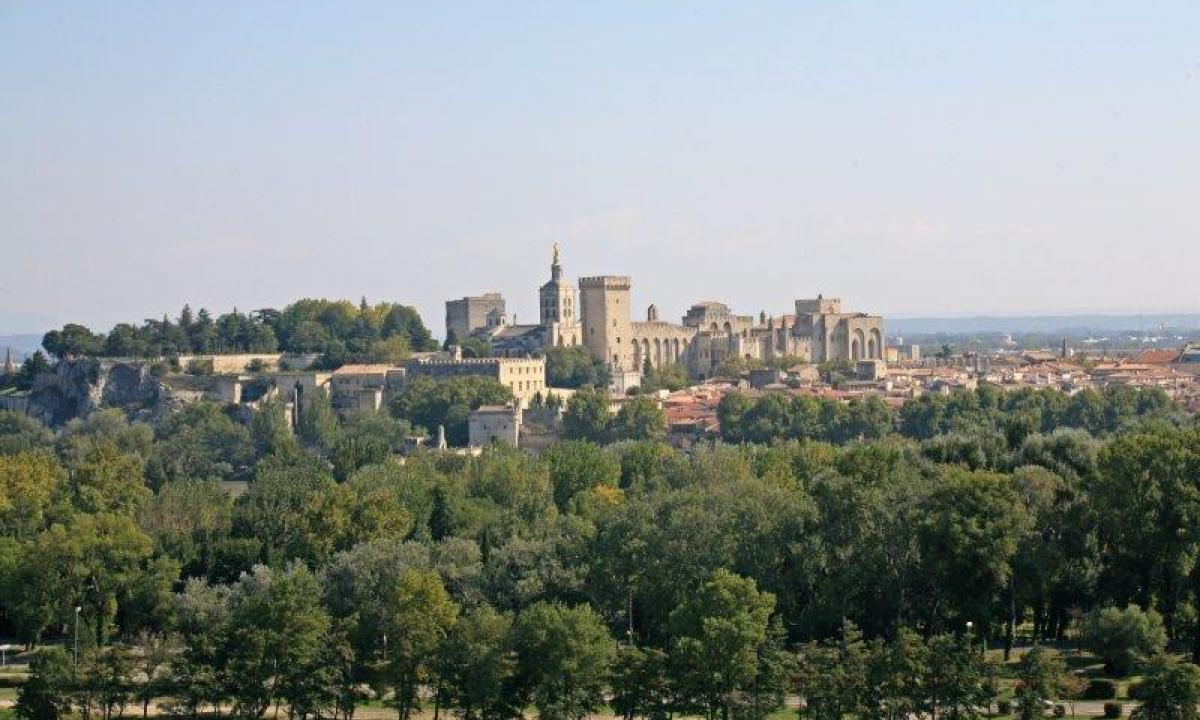 Les terrasses de l 39 olivier - Psylle de l olivier ...